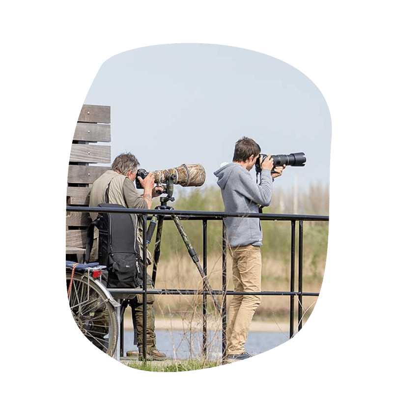 Website laten maken Sint-Niklaas Ontdek het Waasland